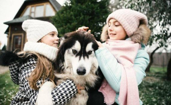 фотосессия с собакой хаски семейная фотосъемка на даче на природе