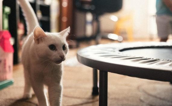 семейная кот домашная детская живая фотосессия