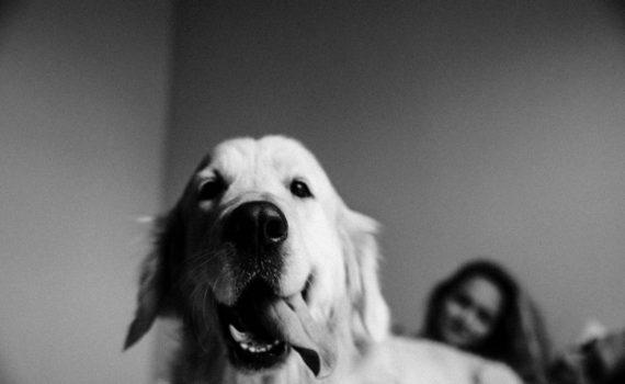 лав стори, довольный пес