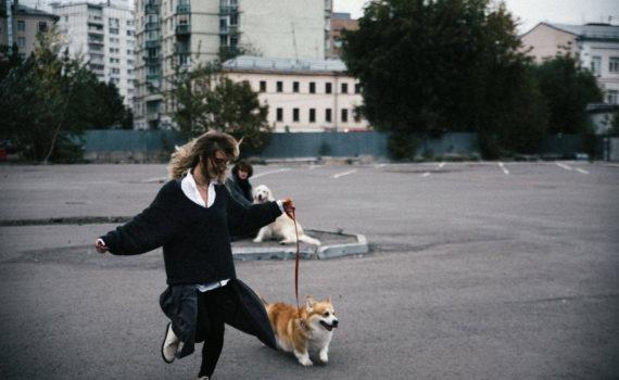 love story с собаками