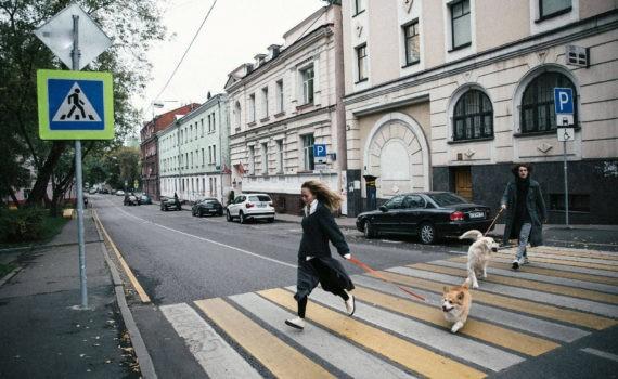 лав стори, прогулка с собаками
