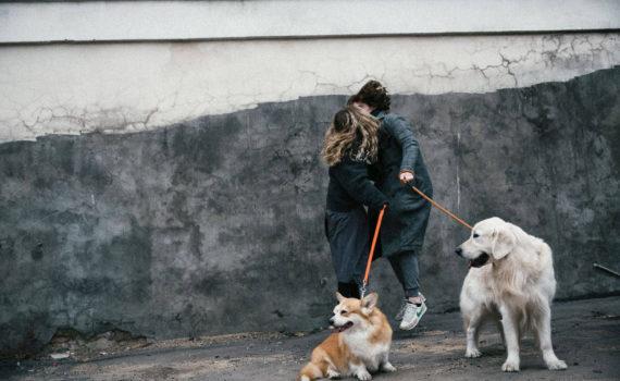фотосессия лав стори пары, на улице, с собаками