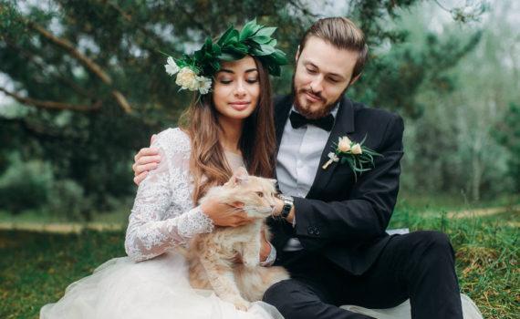 свадебная летняя фотосессия с котом