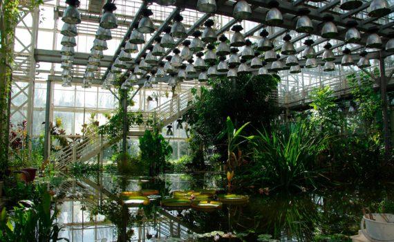 ран ботанический сад