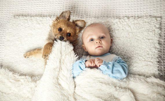 фотосессия ребенка на год дома с домашним животным