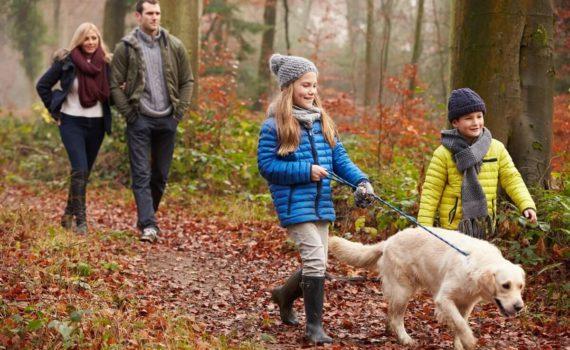 семейная осенняя фотосессия на природе с собакой
