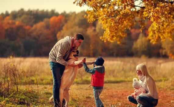 семейная осенняя фотосессия с животными